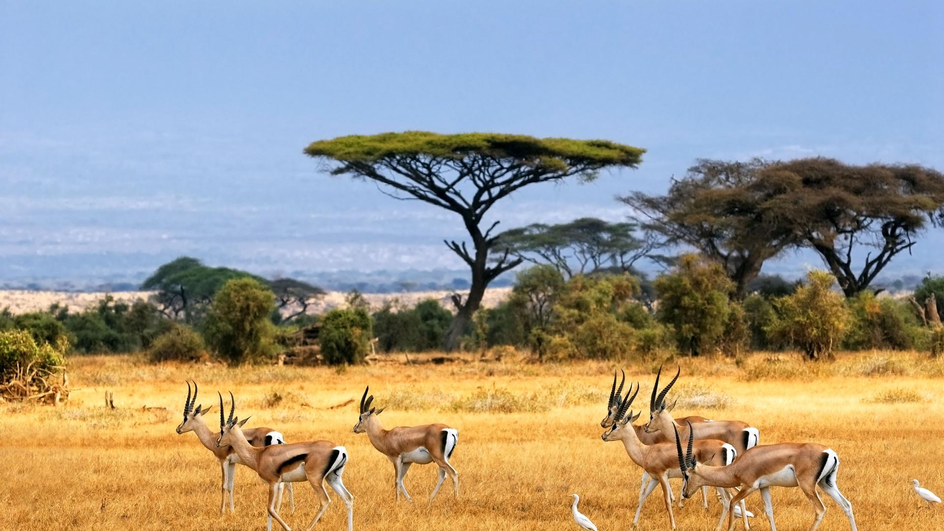 Imagem do paconte O Melhor da Namíbia