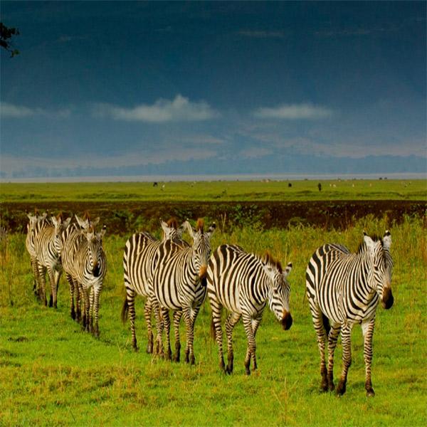 Imagem do paconte Roteiro África Experience