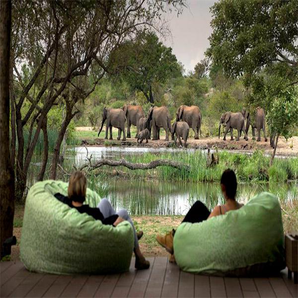 Imagem do paconte Botswana Safári para a família