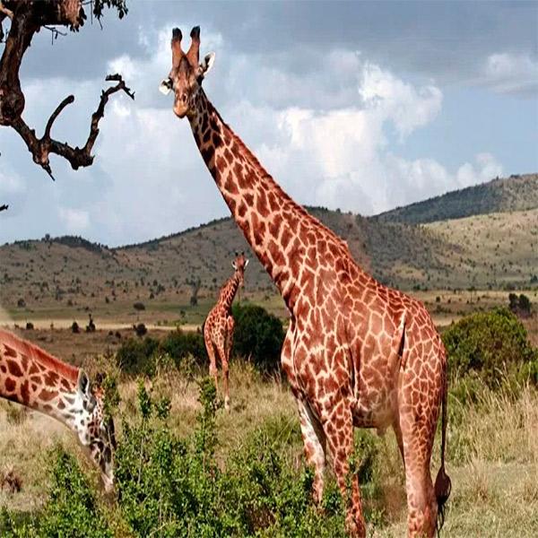 Imagem do paconte Quênia Clássica