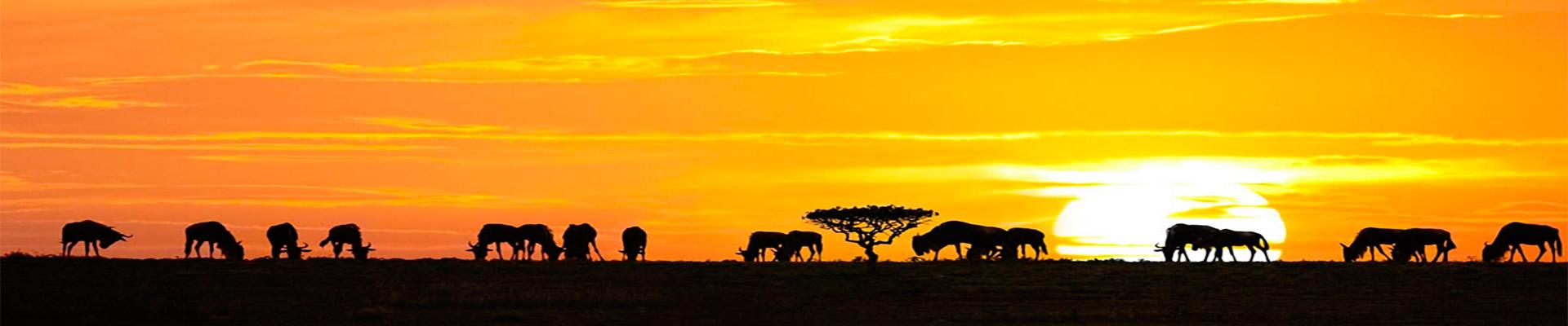 Quênia e Tanzânia para Exploradores