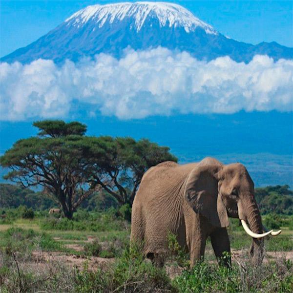 Imagem do paconte Quênia e Tanzânia Clássica