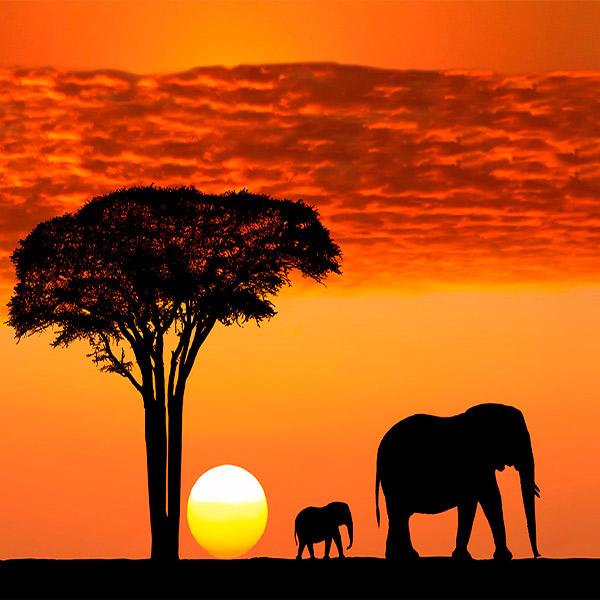 Imagem do paconte Quênia e Tanzânia para Exploradores
