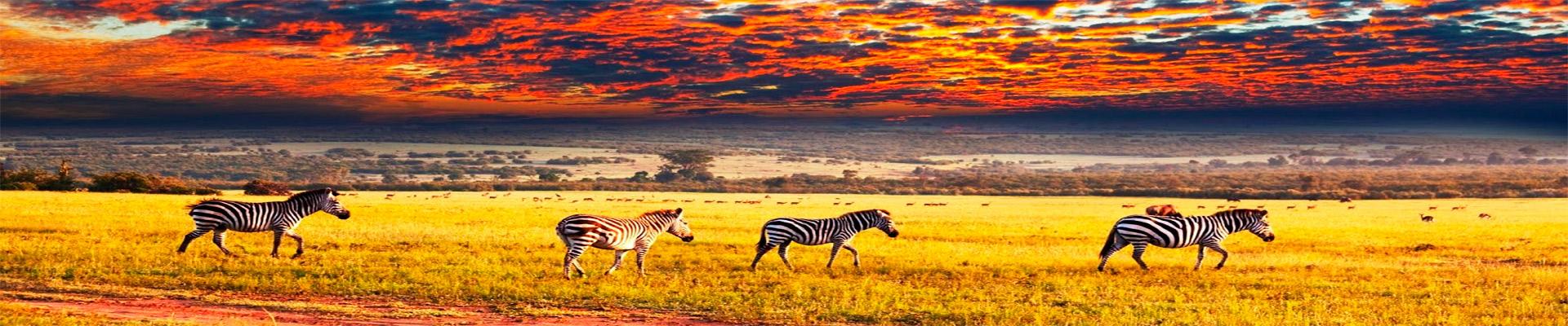 Riquezas da África do Sul