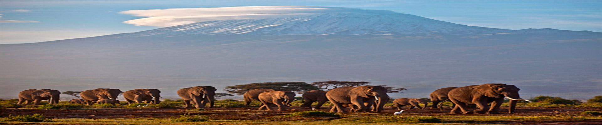 Quênia e Tanzânia Clássica