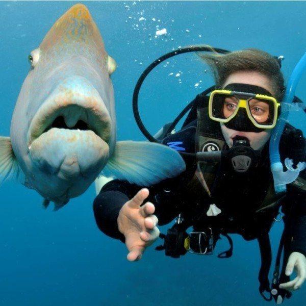 Imagem do paconte Mergulho no Buddy Dive Resort