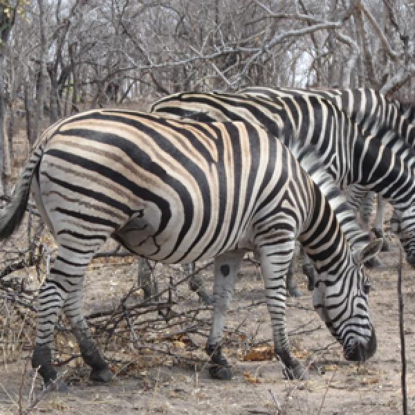 Imagem do paconte Namíbia, Delta do Okavango & Cataratas Vitória