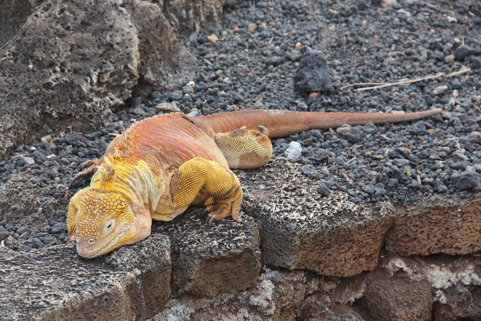 Imagem do paconte Paisagens do Equador