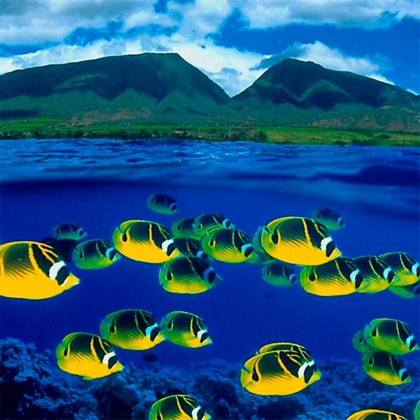 Imagem do paconte Maui