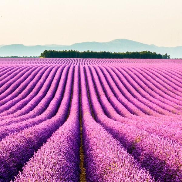 Imagem do paconte Roteiro de Carro - Provence e Riviera Francesa