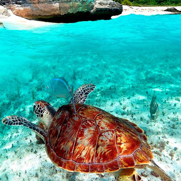 Imagem do paconte Cancun e Cozumel
